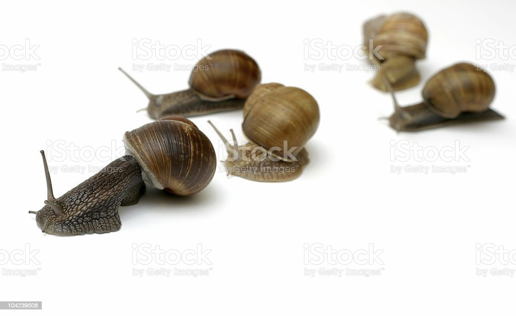 Racing Snails royalty-free stock photo