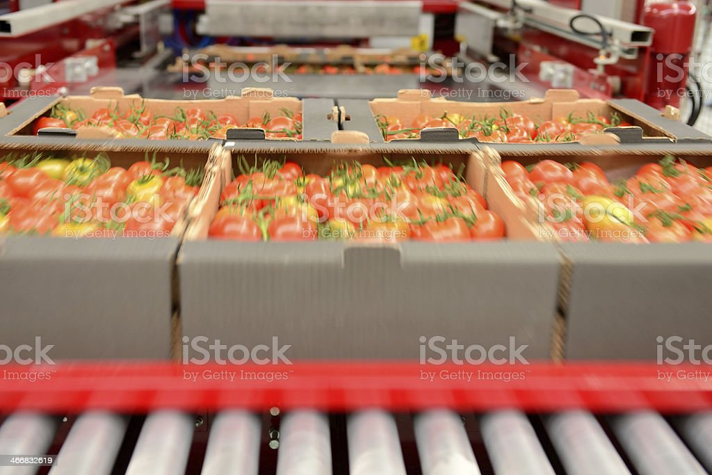 A rack of tomatoes in a production line stock photo
