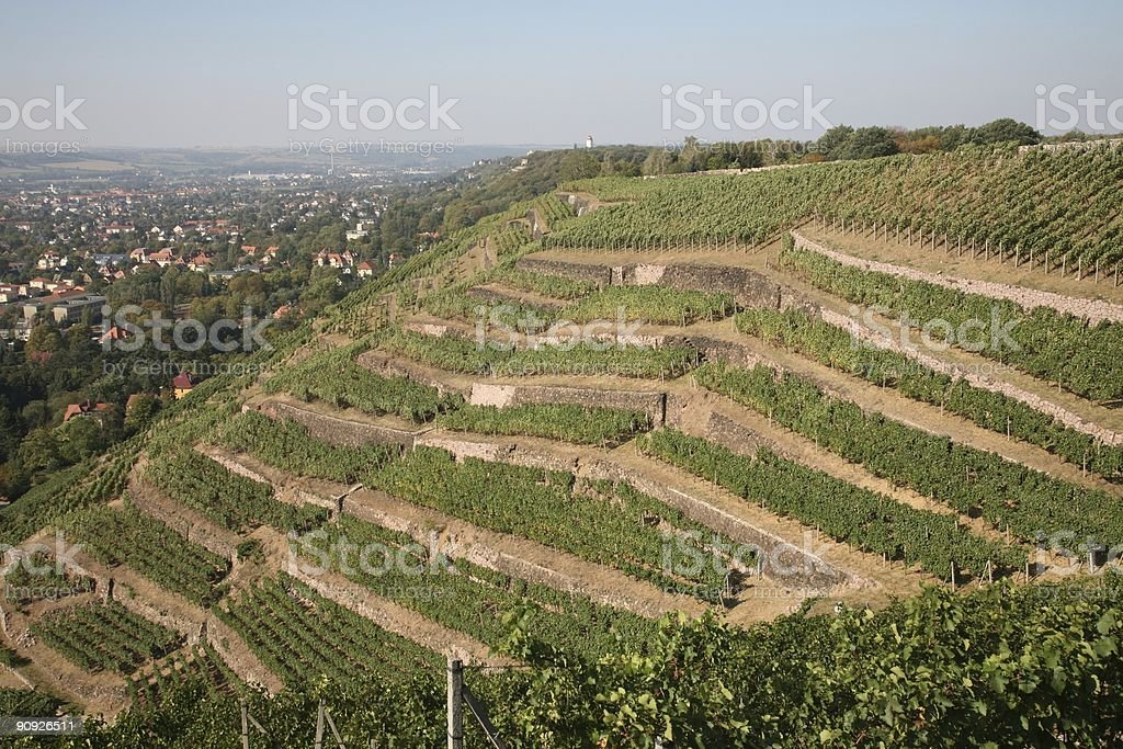 Radebeul Vineyards royalty-free stock photo