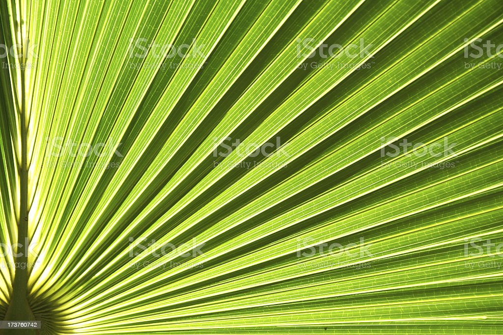 radiant green royalty-free stock photo