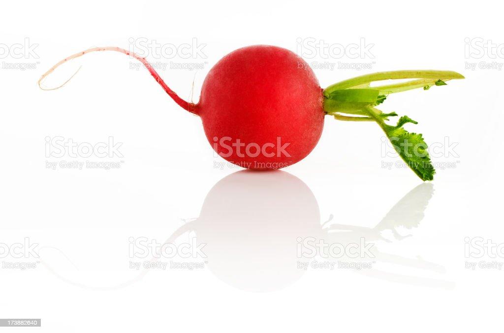 Radish on white background royalty-free stock photo