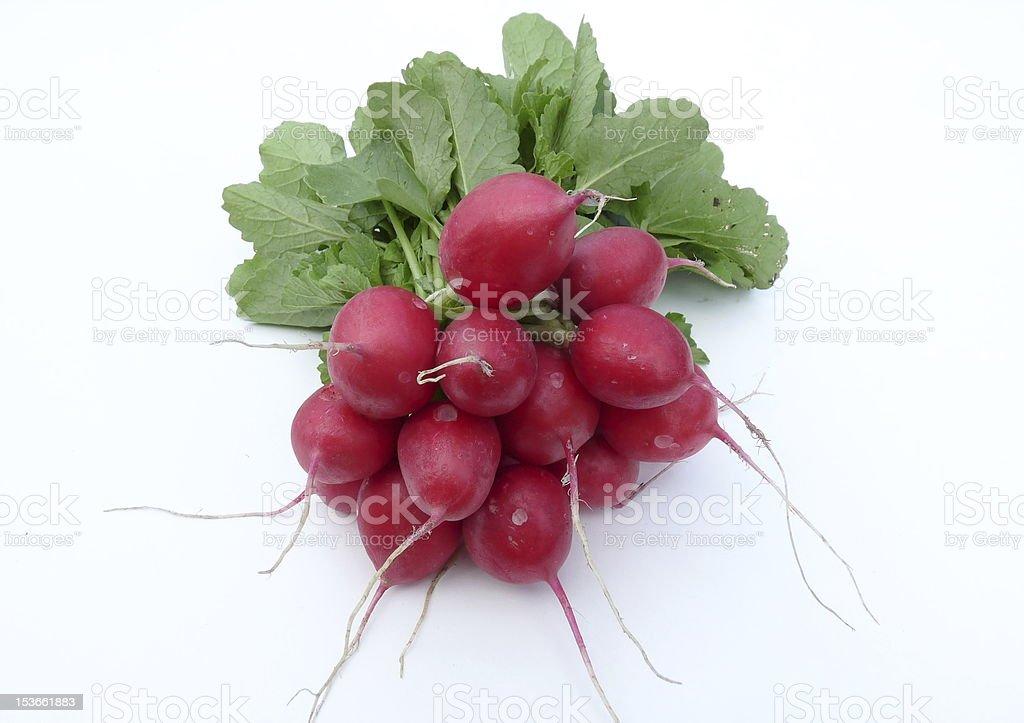 radish stock photo