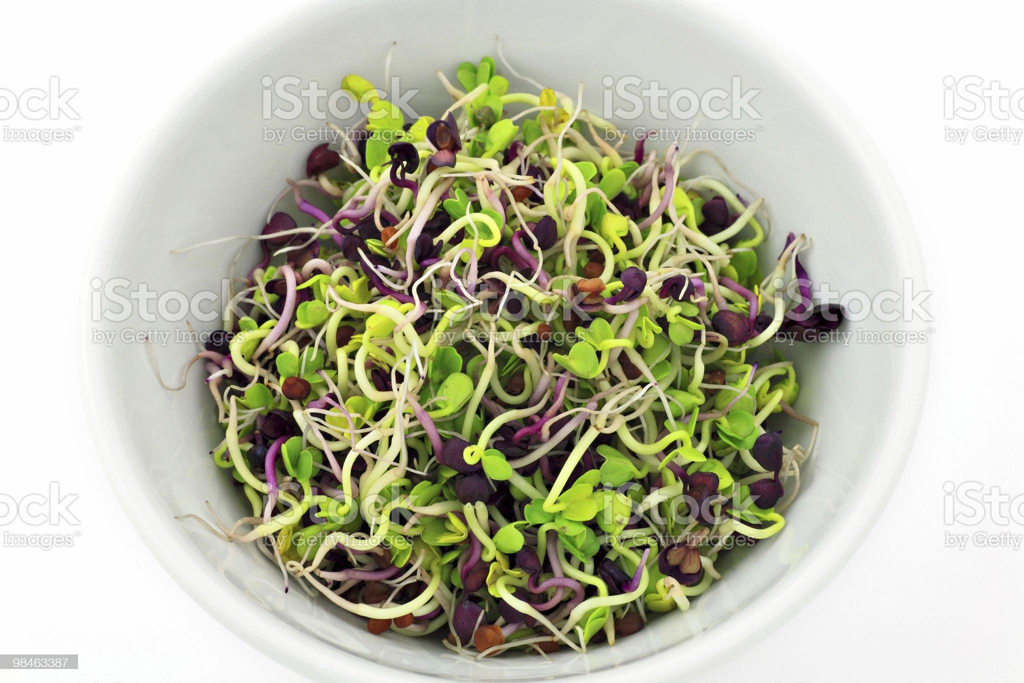 Radish sprouts royalty-free stock photo