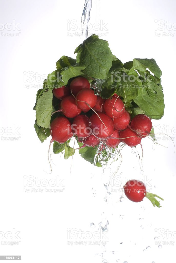 Radishes royalty-free stock photo