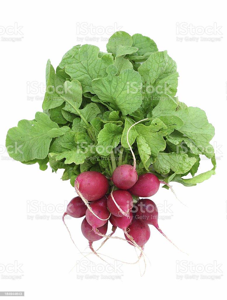 radishes stock photo