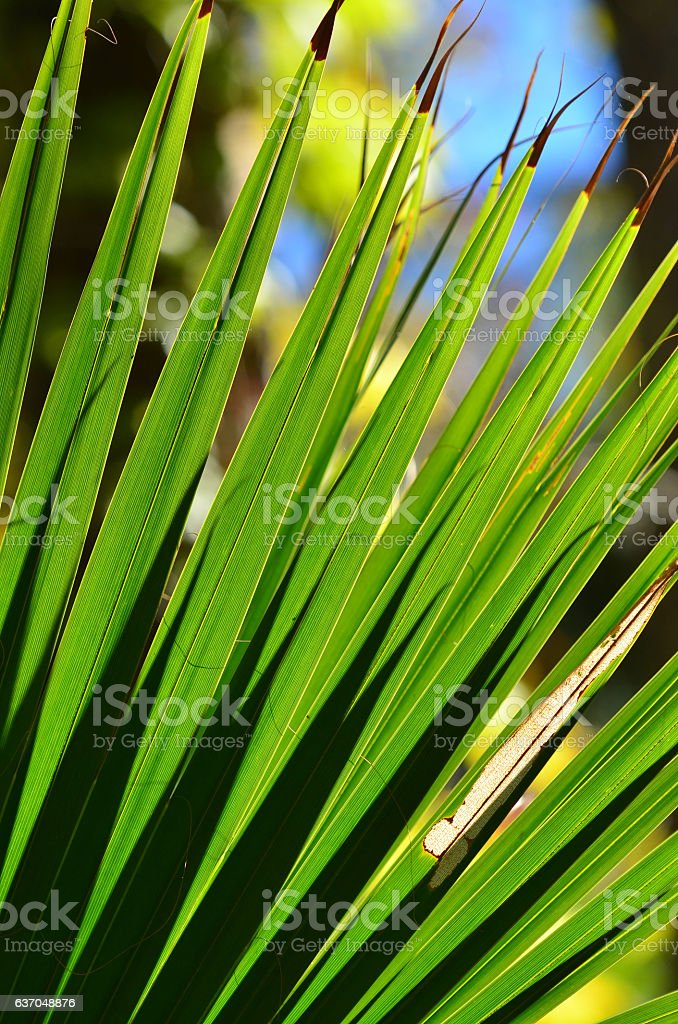 Radtiating palm frond fingers with shadows stock photo