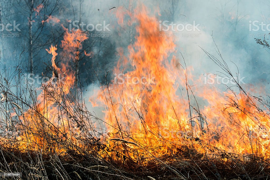 raging fire in a forest fire stock photo