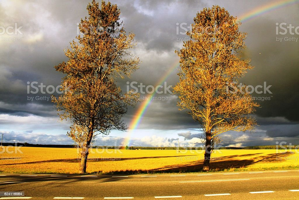Raibow between two trees. stock photo