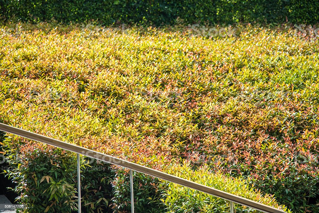 rail stair seperate between shrub and pebble stock photo