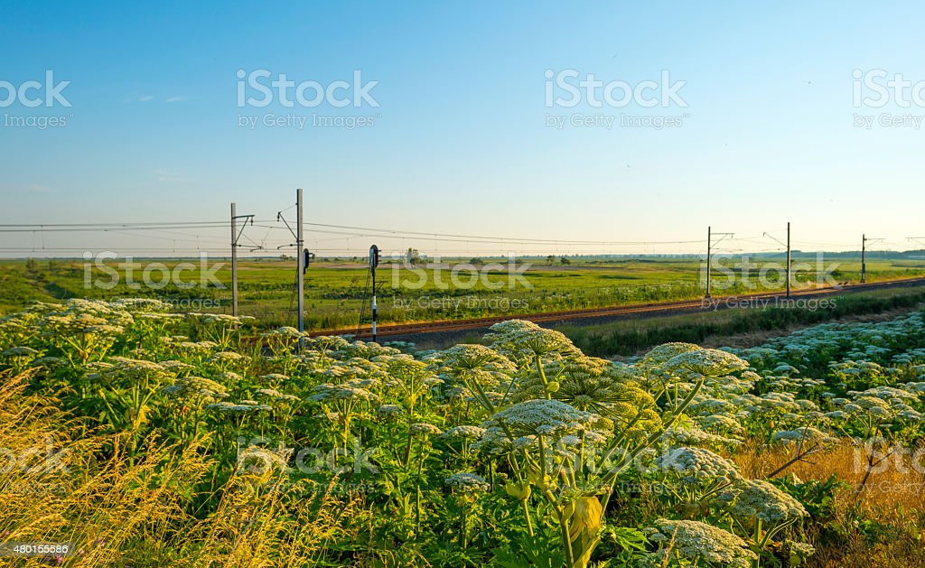 Railroad through a sunny landscape in summer stock photo