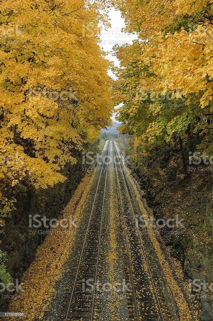 Railroad Tracks into the Distance with Yellow Maple Trees Overhanging royalty-free stock photo