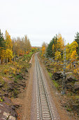 Railroad train track in the forest