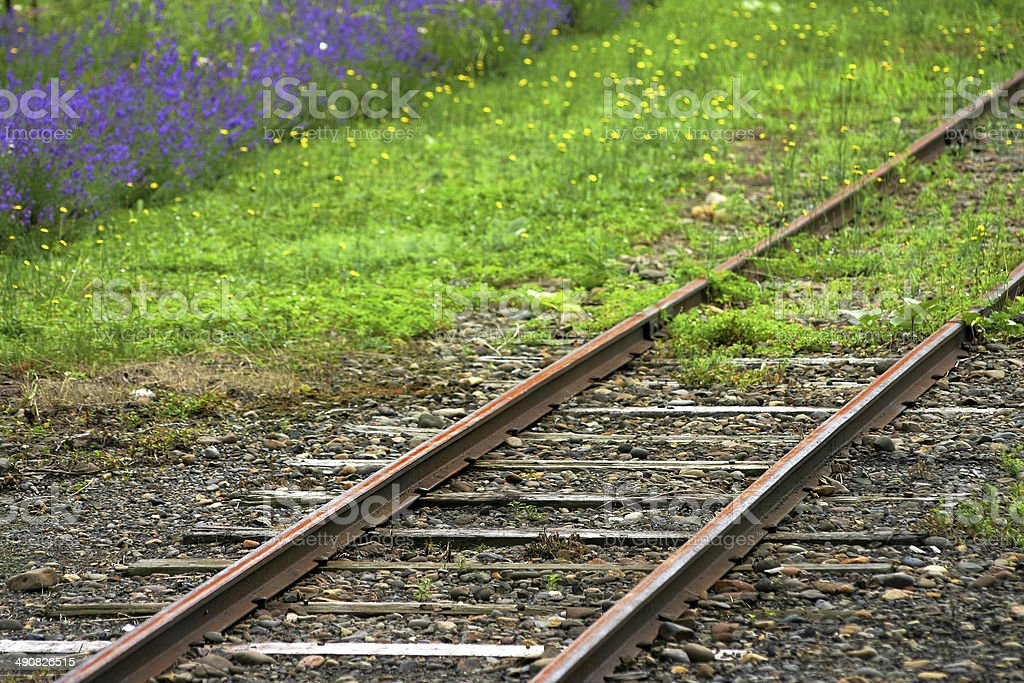railway and flowers stock photo