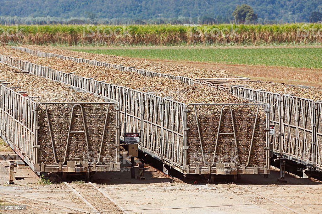 Railway bins loaded with sugar cane for crushing stock photo
