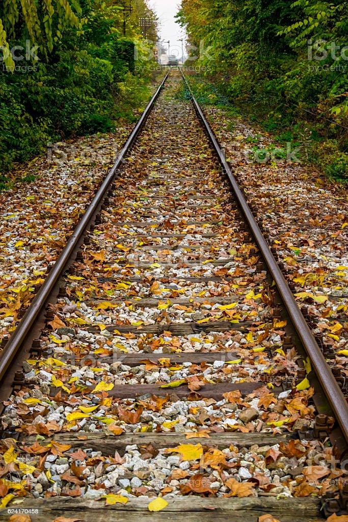 Railway through fall woods royalty-free stock photo