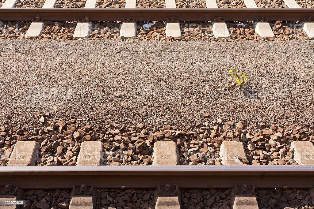 Railway Tracks and Yellow Flower royalty-free stock photo