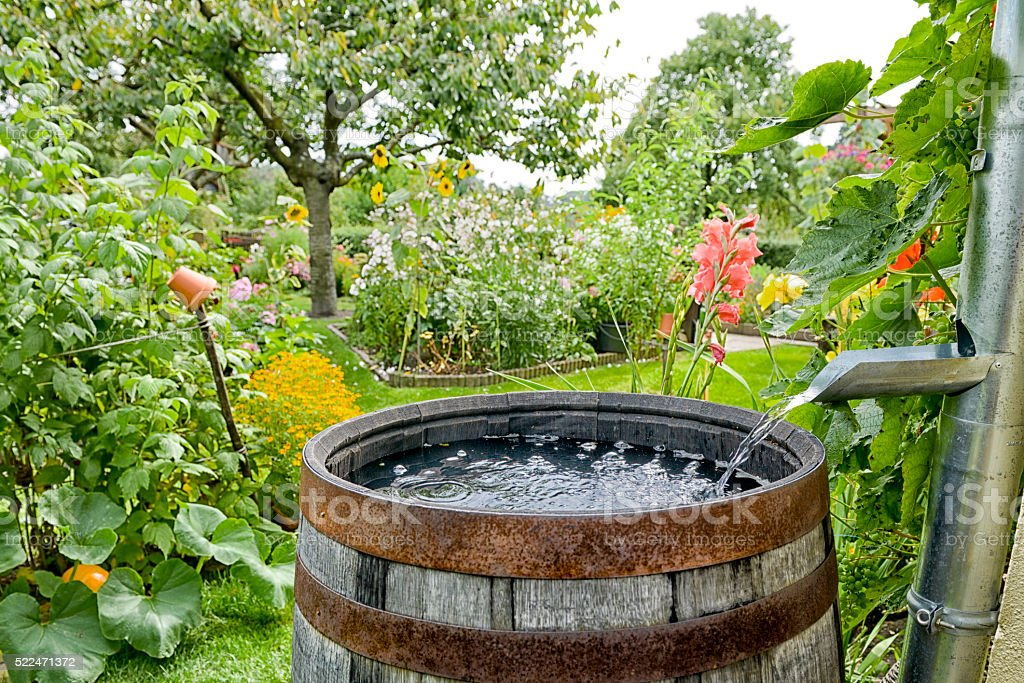 Rain barrel in the garden stock photo