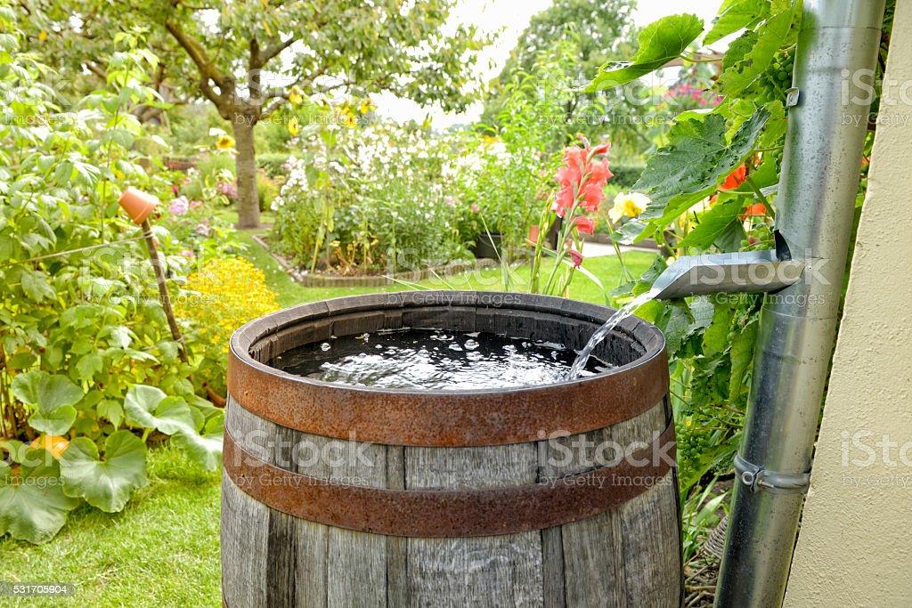 Rain barrel in the garden stock photo
