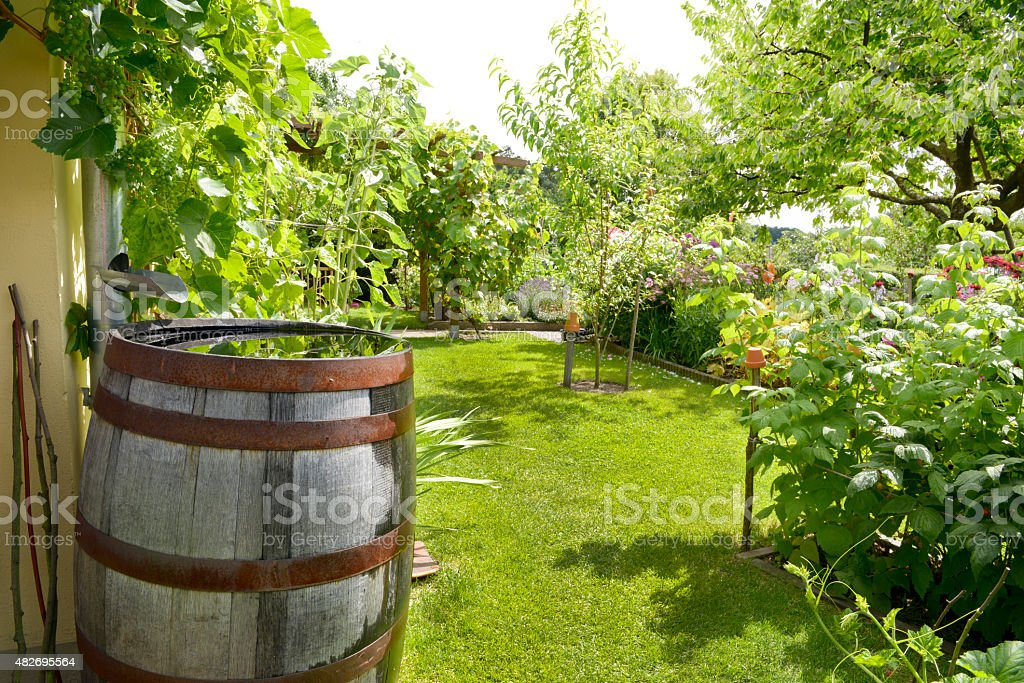 rain barrel stock photo