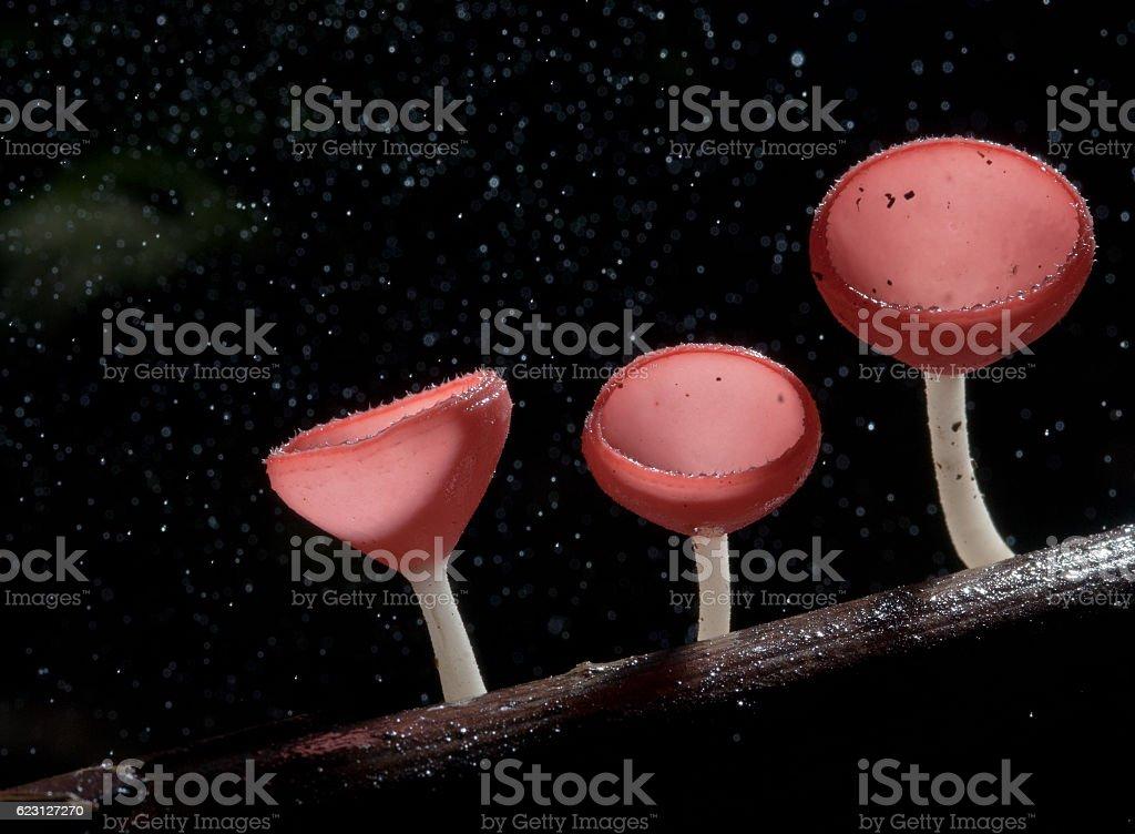 Deszcz piękny Różowy szampan mushroom Podszewka z drewna zbiór zdjęć royalty-free