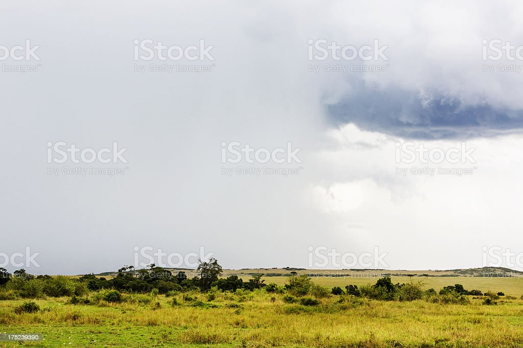 Rain coming in over East African savannah royalty-free stock photo