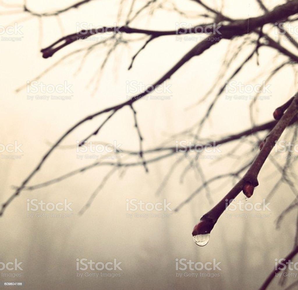 Rain drop on a branch stock photo