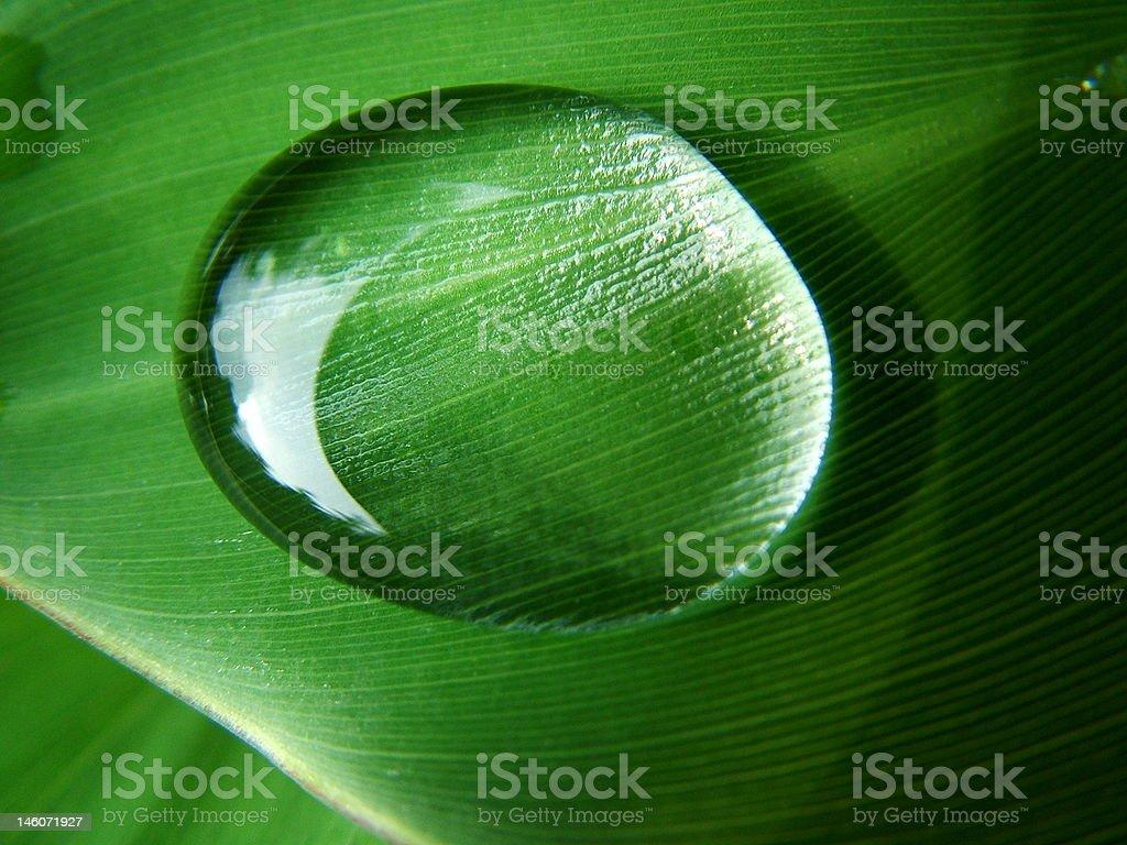 Rain Drop on Banana Leaf stock photo