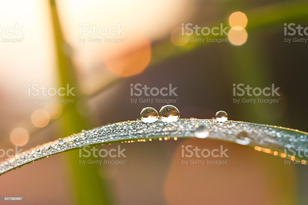 Rain drop on green leaf, drops of dew on a green grass stock photo