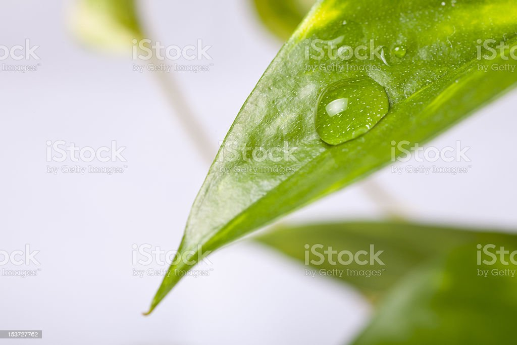 rain drop royalty-free stock photo