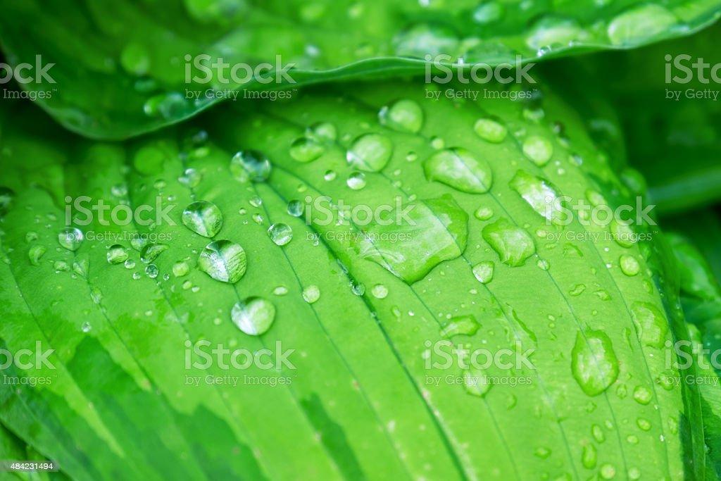 Rain drops on a leaf stock photo