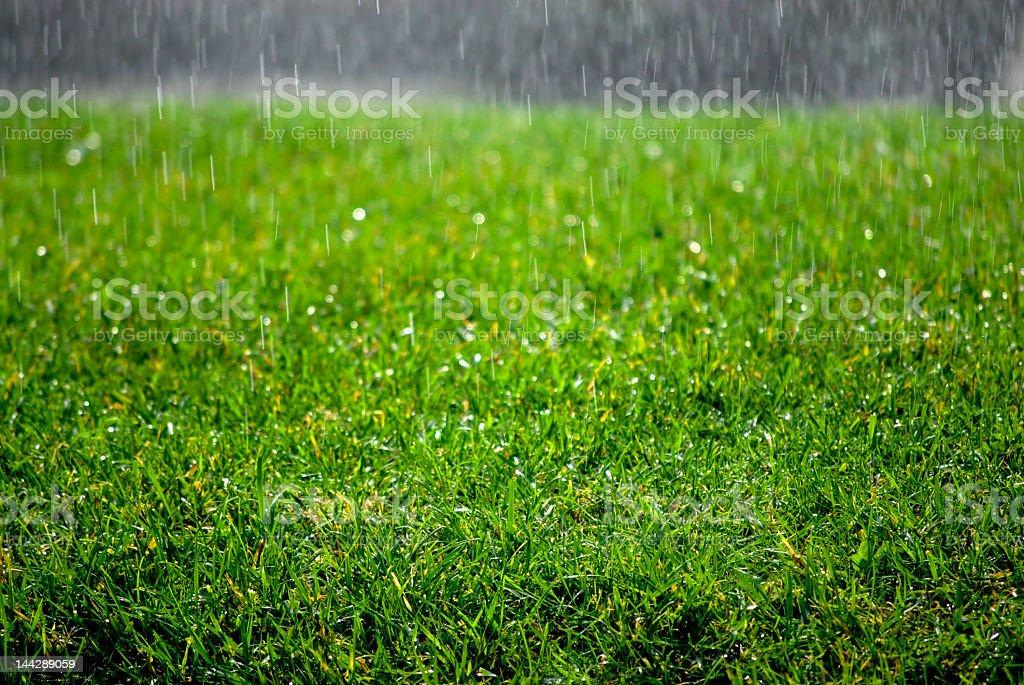 Rain Drops on Grass stock photo