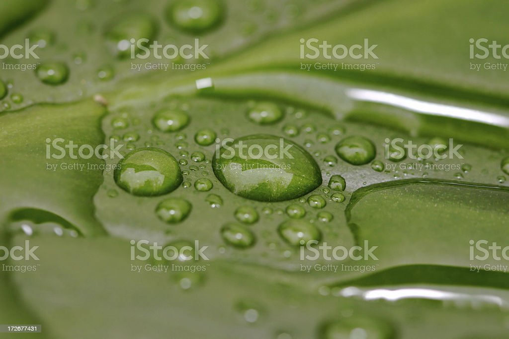 Rain Drops on Green Leaf royalty-free stock photo