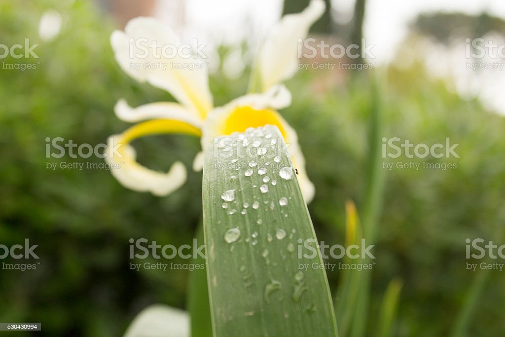 Rain drops on leaf stock photo