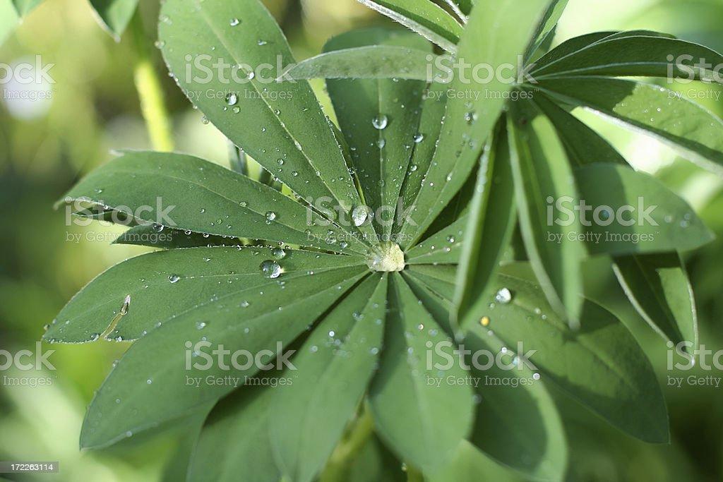 Rain drops. royalty-free stock photo