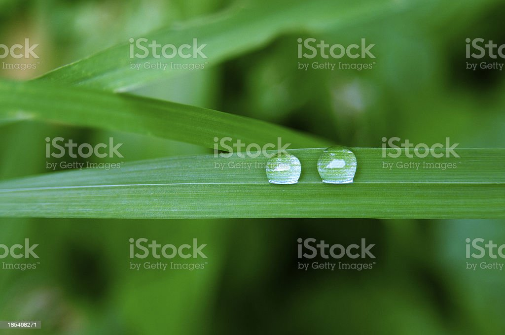 Rain drops royalty-free stock photo