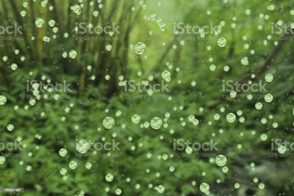 Rain falls in the forest. stock photo