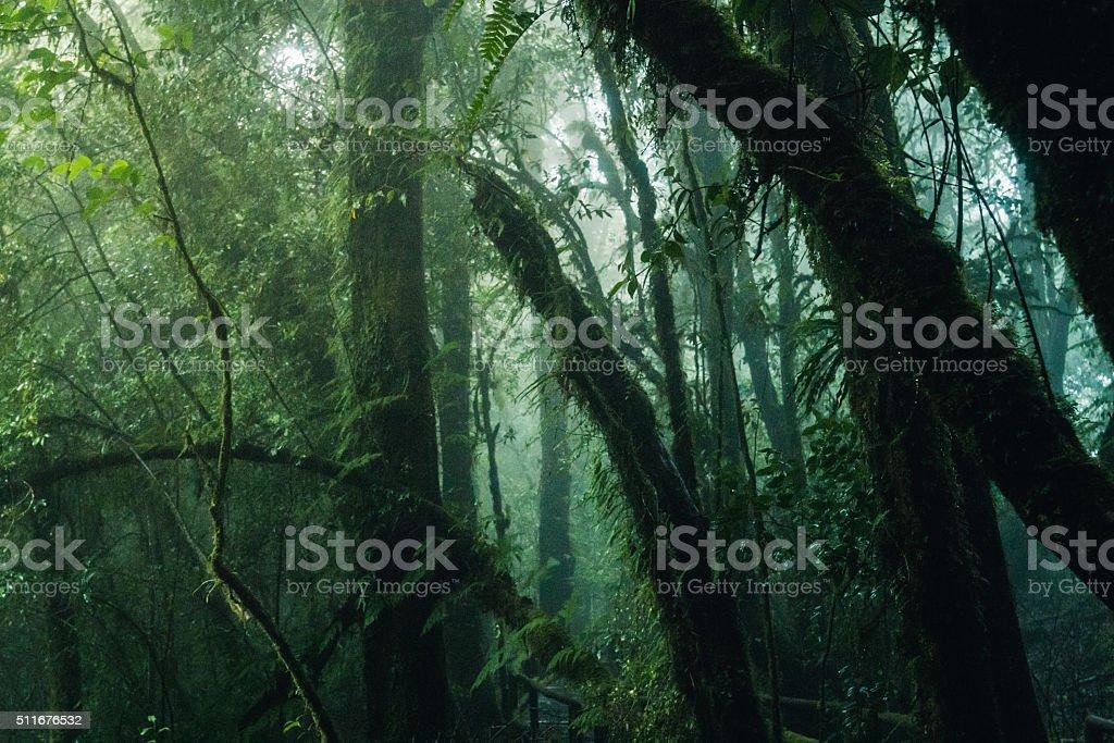 Rain forest at Doi Inthanon national park, Thailand. stock photo