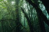 Rain forest at Doi Inthanon national park, Thailand.