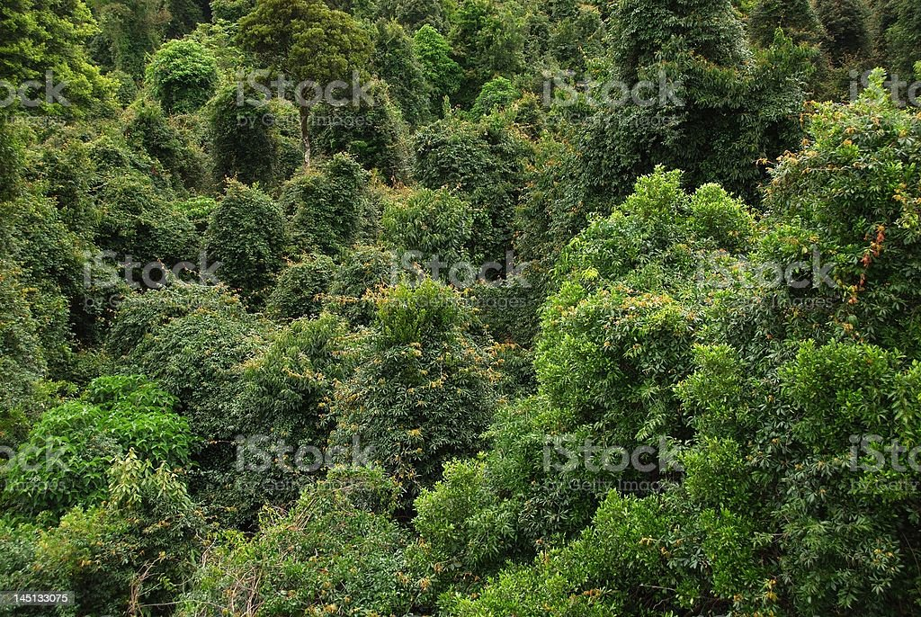 Rain Forest Canopy 2 royalty-free stock photo