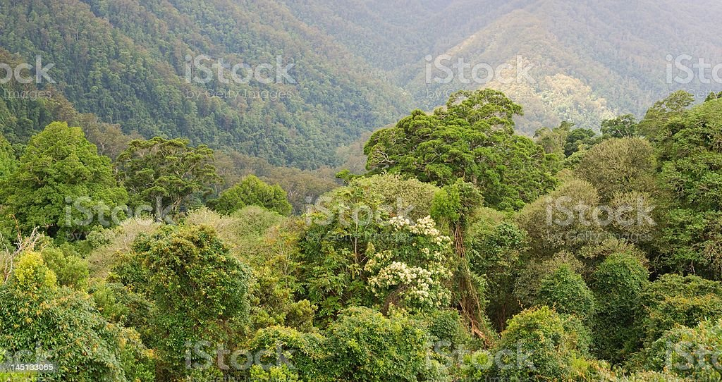 Rain Forest Canopy - Panorama royalty-free stock photo