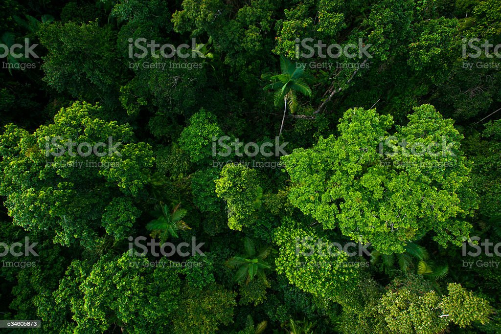 Rain forest from air near Kuranda, Queensland, Australia stock photo
