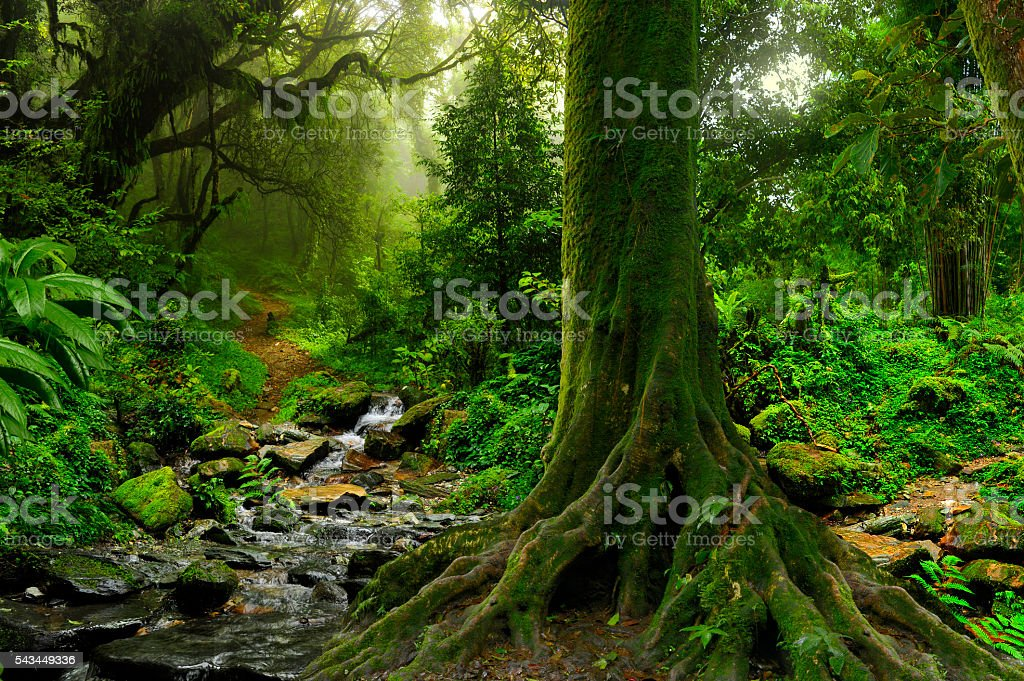 Rain forest in northern Thailand stock photo