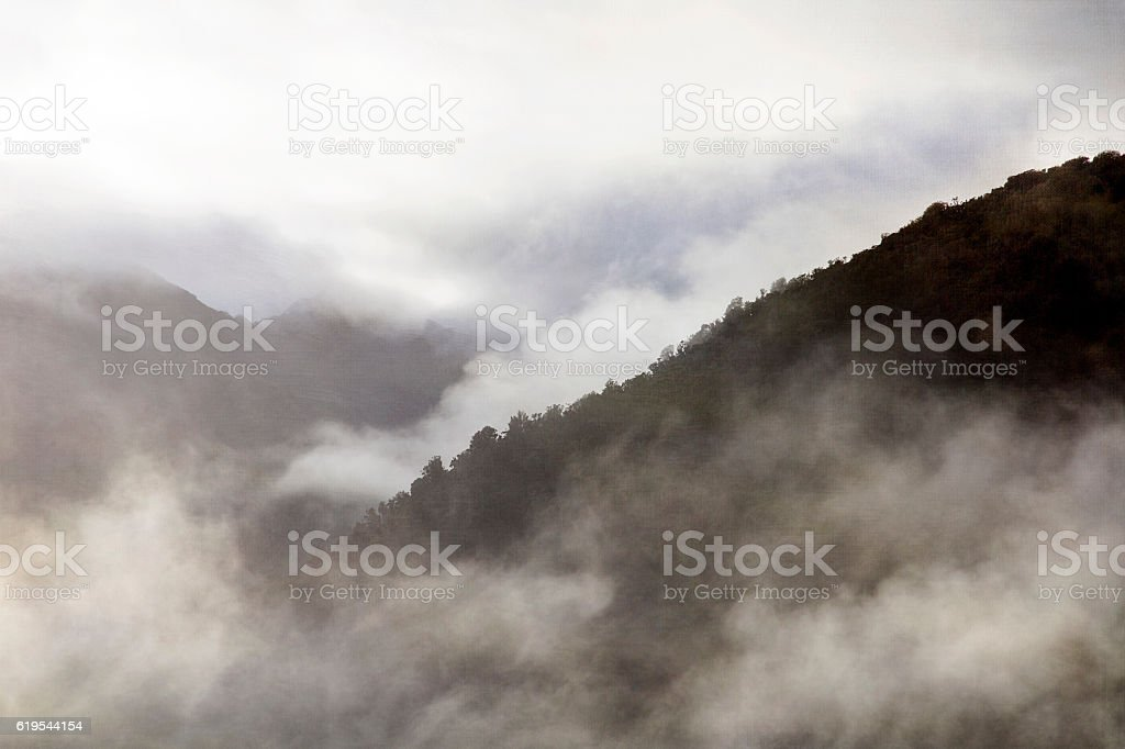 Rain Forest - New Zealand stock photo