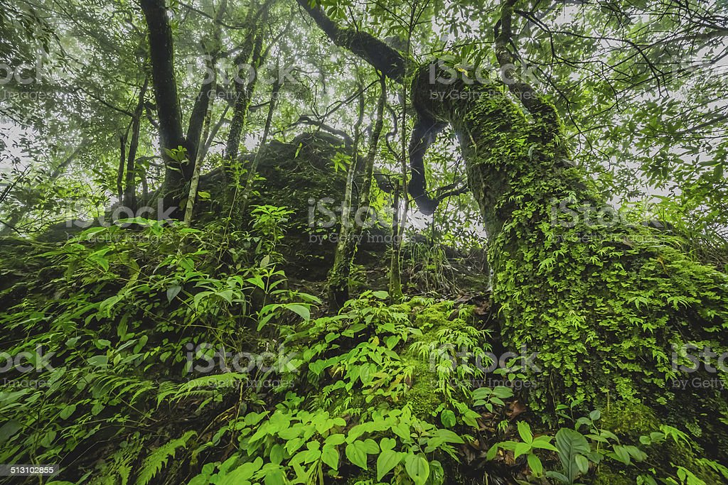 Rain Forest stock photo