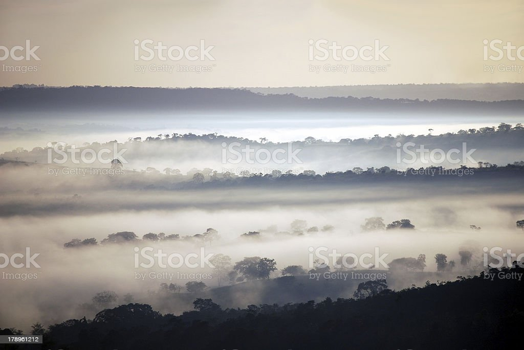 Rain forest waking up royalty-free stock photo