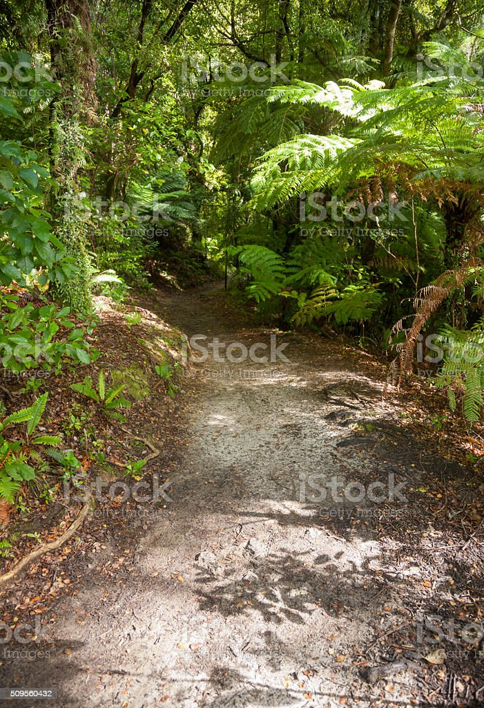 Rain forest walk at Queen Charlotte Track in Marlborough Sounds stock photo
