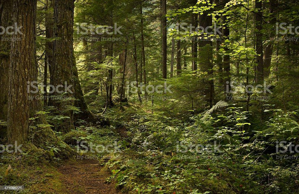 熱帯雨林と通路 ロイヤリティフリーストックフォト