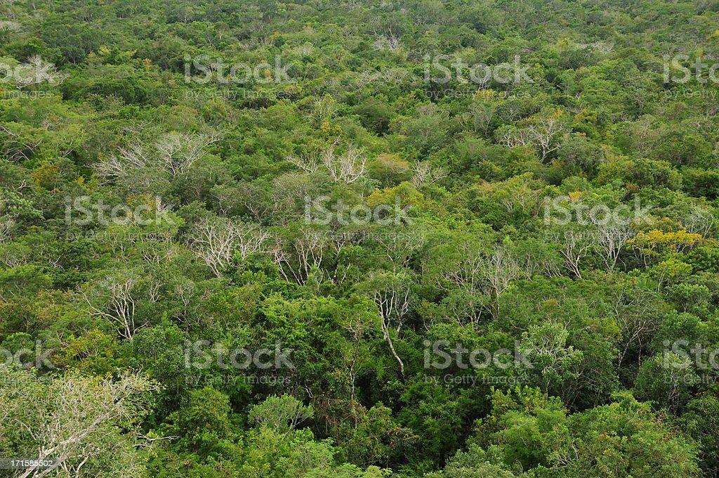 Rain forest,Coba,Yucatan,Mexico. stock photo