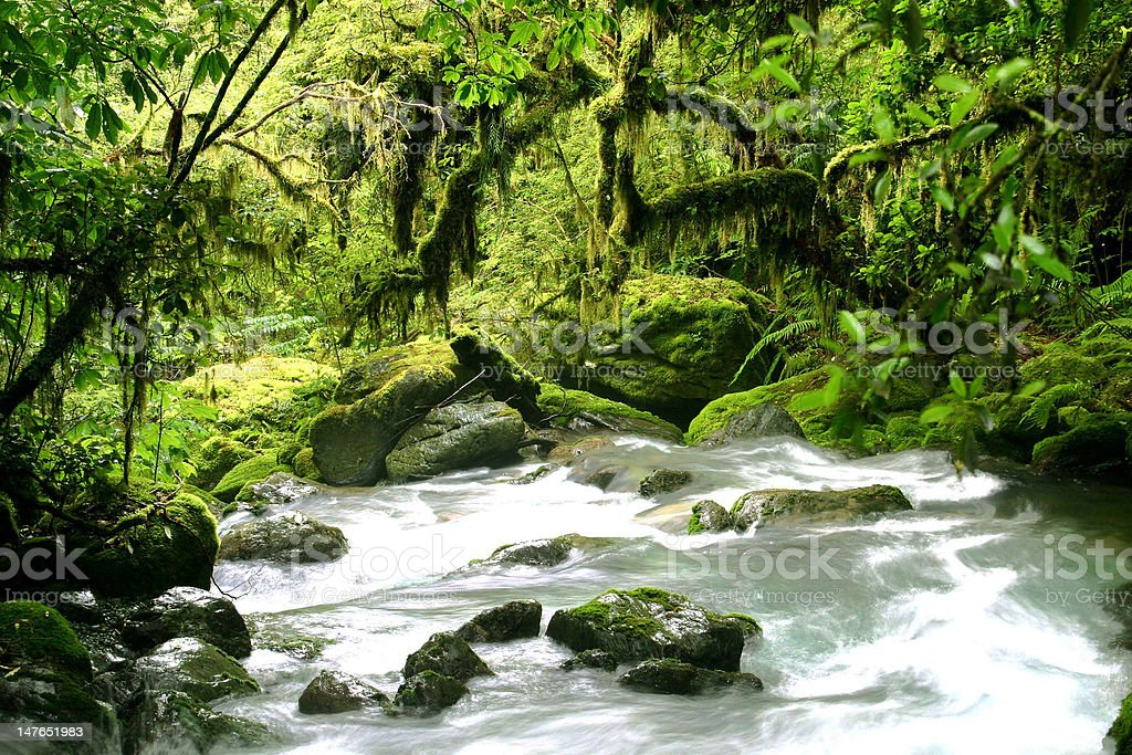 Rain green forest stock photo