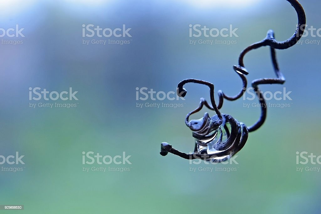 Rain in a vineyard royalty-free stock photo